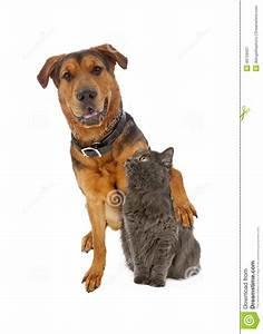 Large Mixed Breed Dog Arm Around Cat Stock Photo - Image ...