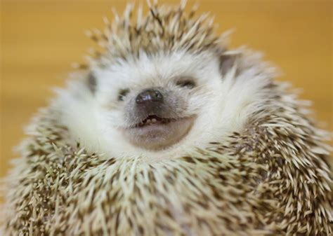 8 Things To Know About These Prickly Creatures