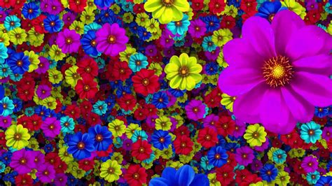 colorful flowers colorful flowers background hd 1080p