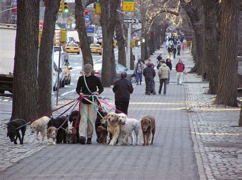 dog york walker walkers dogs nyc service central lady