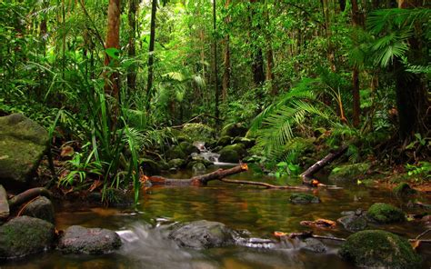 rainforest wallpaper   amazing high