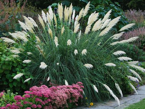 grass for landscaping landscaping 101 different types of plants landscaping ideas and hardscape design hgtv
