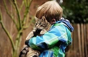 Was Brauchen Katzen : warum kinder katzen brauchen 5 gr nde kinder mit katzen ~ Lizthompson.info Haus und Dekorationen