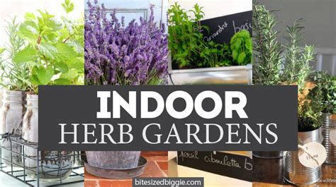 how to grow more herbs indoors bite sized biggie