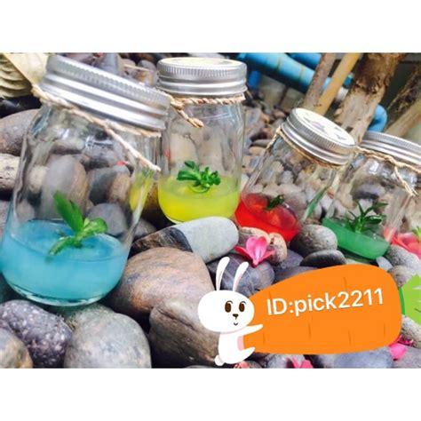 💥ต้นไม้จิ๋วในขวดแก้ว   Shopee Thailand