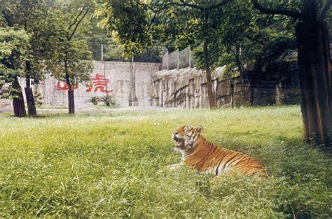 Les Zoos Dans Le Monde  Chongqing Zoo