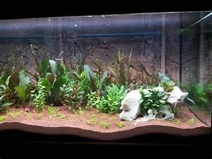 Pflanzen Terrarium Einrichten : aquarium aufstellen und einrichten aquarium fische ~ Watch28wear.com Haus und Dekorationen