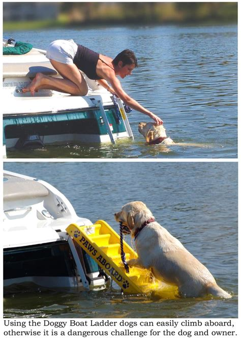 Which Practice Reduces The Risk Of A Boating Emergency by 40 Best Images About Boating With Pets On For