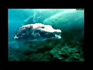 Animal face off Crocodile vs shark - YouTube