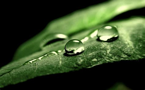 photography nature macro leaves water drops black
