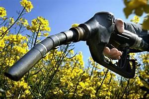 What are biofuels: Bioethanol & Biodiesel - SchoolWorkHelper