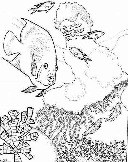 Reef Coral Coloring Pages Drawing Fish Barrier