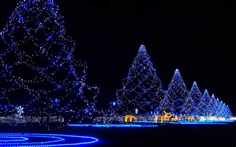 christmas trees covered in lights wallpaper 1070138