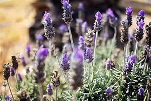 Wiese Mit Blumen : kostenlose bild lila blume mit blumen pflanze wiese ~ Watch28wear.com Haus und Dekorationen