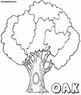 Oak Coloring Pages Tree Hollow Colorings sketch template