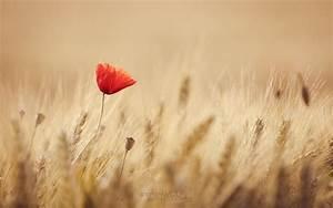 Summer Love by paulchen11 on DeviantArt