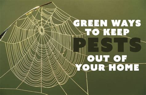 Green Ways To Keep Pests Out Of Your Home Chadwicks