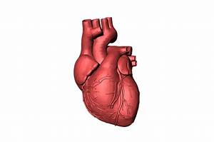 Ilustración gratis: Corazón, Sangre, Órgano, Humano Imagen gratis en Pixabay 1765298