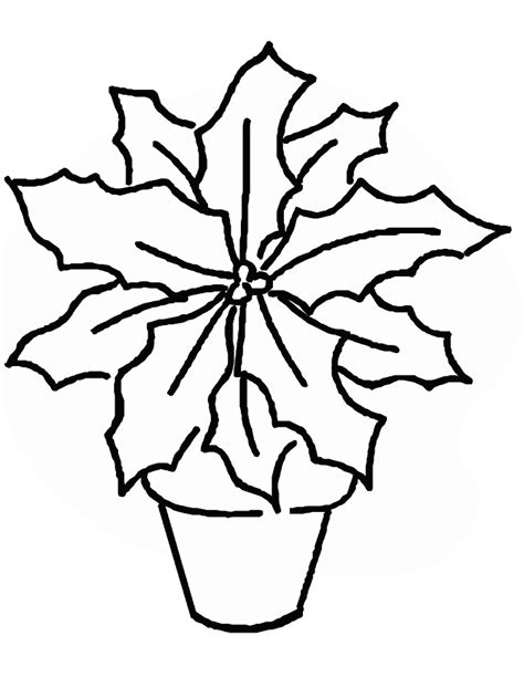 printable poinsettia holidays coloring pages coloringpagebookcom