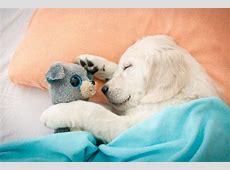 Tierschlaf » kuriose Schlafverhalten der Tiere Meine