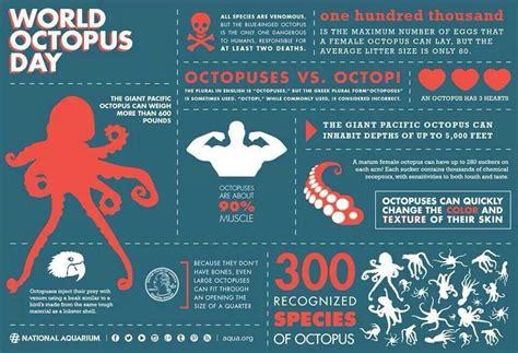 octopus facts catch all 862   1c93d554a706171b965bc2d53a42a919