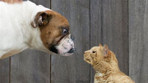 Dog People Vs Cat People What Pet Preference Says About
