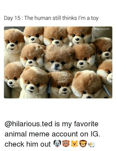 Ted Memes 25 Best Memes About Animals Memes Animals Memes