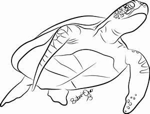 Sea Turtle Lineart by Britannia-Orca on DeviantArt