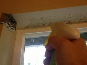 removing mold from painted walls and ceiling thriftyfun With cleaning mildew from bathroom ceiling