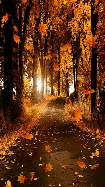 Animated Autumn Wallpaper - leaves falling on path trees animated autumn leaves fall