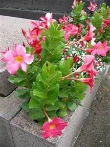 Fleur D Hiver Pour Jardinière : top 3 des fleurs d 39 ete pour cimetieres paperblog ~ Dailycaller-alerts.com Idées de Décoration