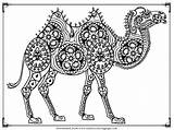 Camel Coloring Pages Printable Adults Adult Realistic Stopping Thanks Enjoy Via sketch template