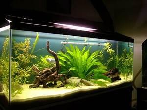 Aquarium Gestaltung Bilder : aquarium einrichtung sorgt f r das wohlf hlen der ~ Lizthompson.info Haus und Dekorationen