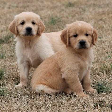 charm city puppies columbia maryland facebook