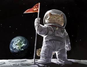22 best images about Cats In Space! on Pinterest | Cats ...