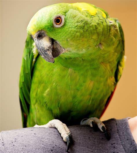 Pet Talk: Few resources exist for exotic birds in Oregon ...