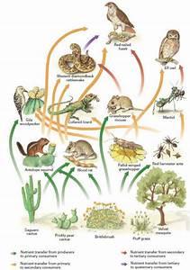 Biodiversity  U2013 Arid Desert