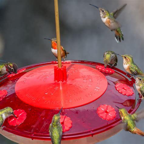happy   hummingbird feeder   droll yankees