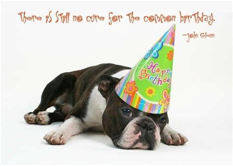 happy birthday    favorite dog lover