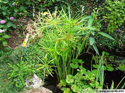 cuisiner les fleurs cultiver le papyrus en pot