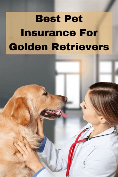 You need to see these top 10 pet insurance in 2021. Best Pet Insurance for Golden Retrievers (2020) - Golden Retriever Society