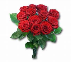 1 Rote Rose Bedeutung : das lustige google spiel seite 67 allmystery ~ Whattoseeinmadrid.com Haus und Dekorationen