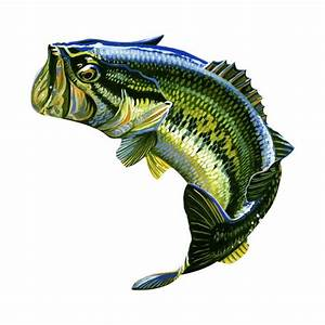 Large Mouth Bass Jumping Decal Bass Fish Decal Fish Fish