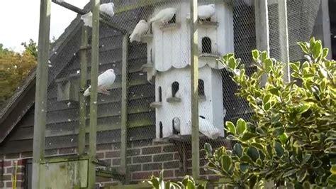 dove house columba birds pigeon breeders dufukofi eldisdufur fuglar youtube