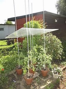 Wäscheständer Für Balkon : tomatendach bauanleitung zum selber bauen heimwerker forum balkon pinterest heimwerker ~ Sanjose-hotels-ca.com Haus und Dekorationen
