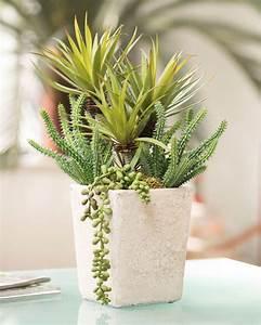 Shop Mixed Artificial Succulents Cactus Plant At Petals