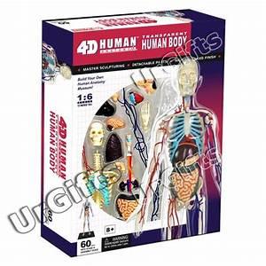 4d Puzzle Human Anatomy 3d Model Transparent Full Body