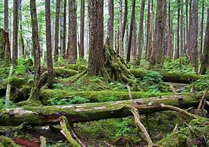 Alaska Is Home To The Largest Rainforest In The Us