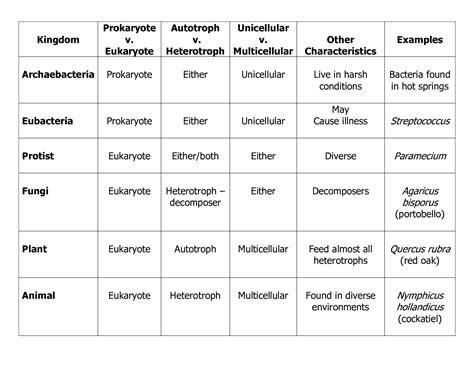6 kingdoms coloring worksheet kingdoms worksheet khayav