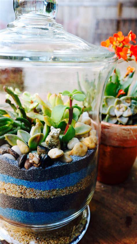 sand  succulents terrarium   easy   homejelly